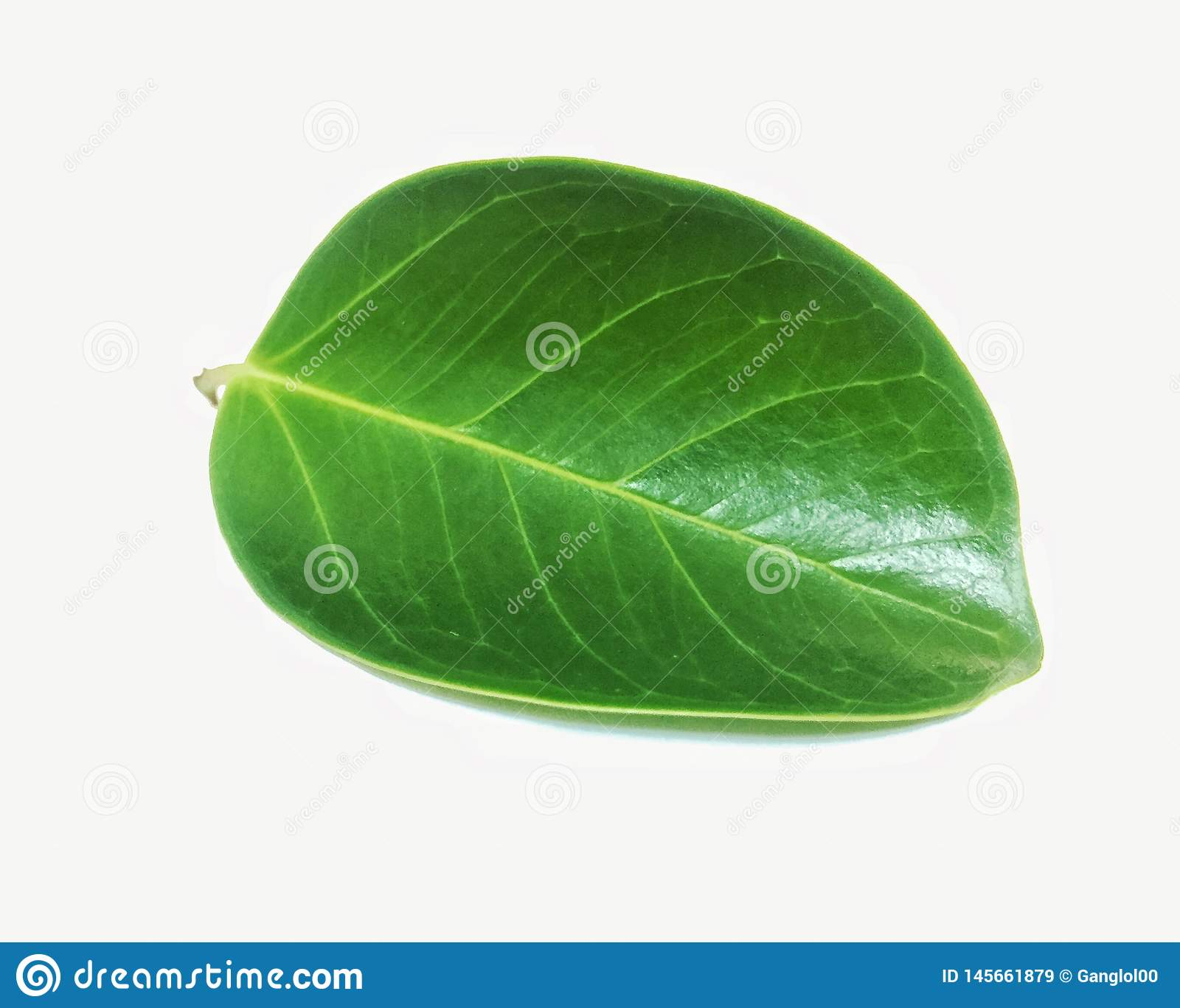 Leaves p? en vit bakgrund