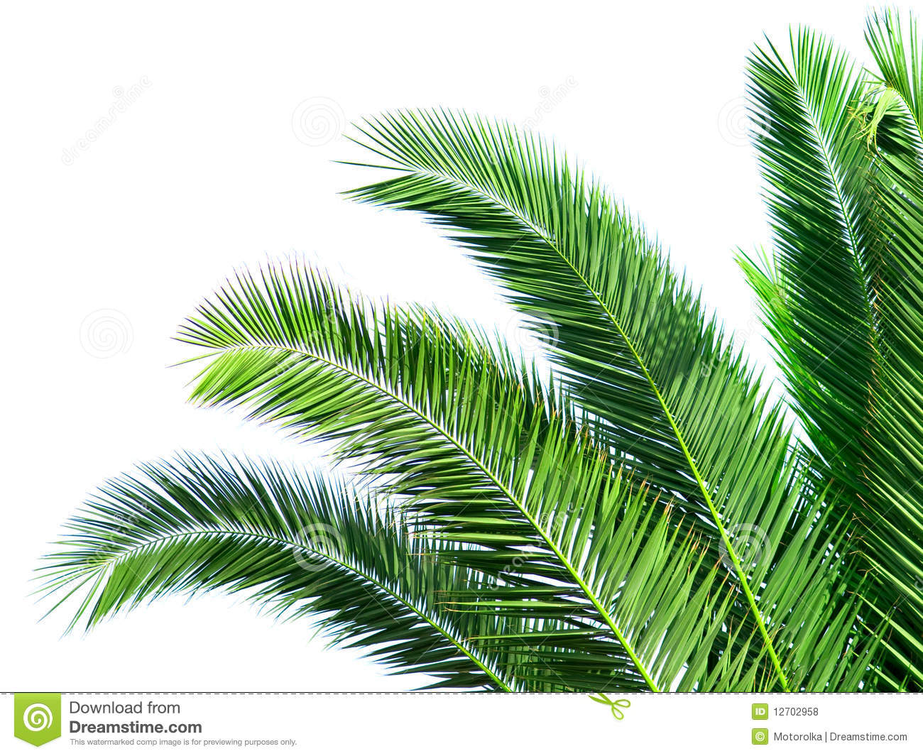 Palm Tree Leaf Clip Art Leaves of palm tree isolated