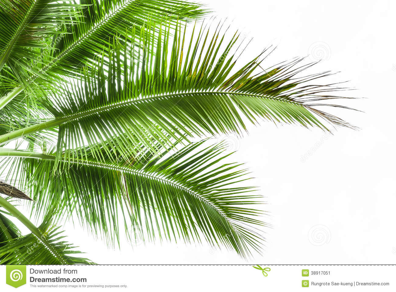Leaves Of Palm Tree Isolated On White Background Stock