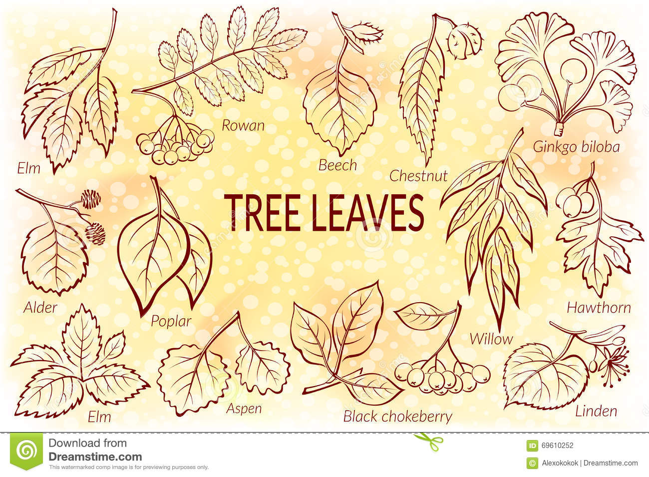 Chestnut Tree Tattoo 1000 Images About Trees American Chestnut