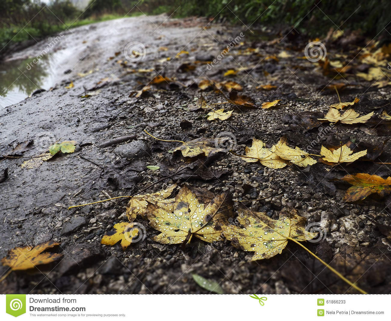 Leaves And Raindrops Stock Photo - Image: 61866233