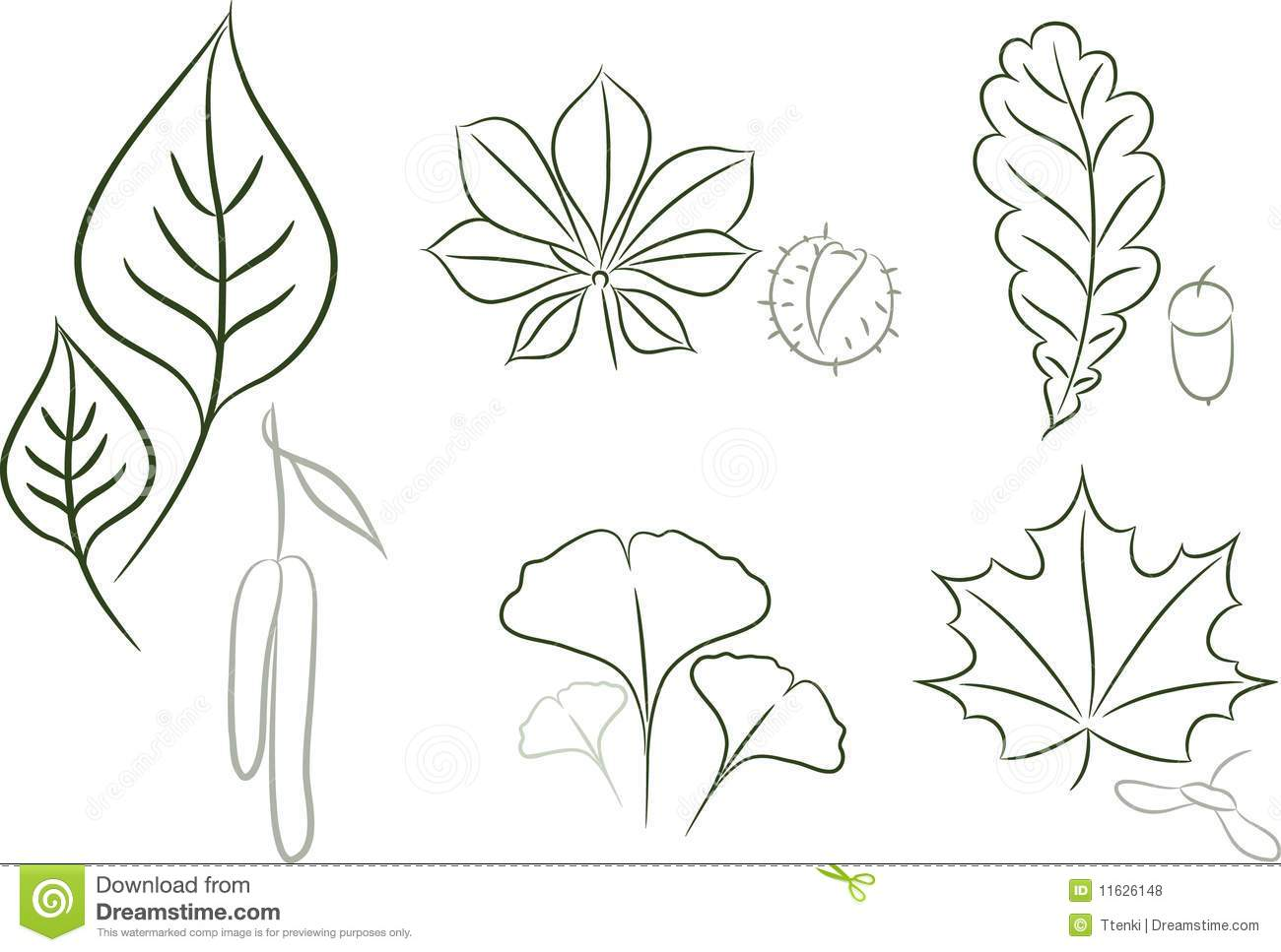Leaves sketch of leaf bearing trees