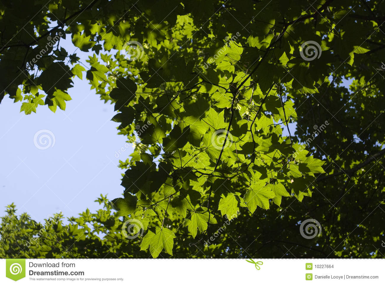 Leaves through the sky