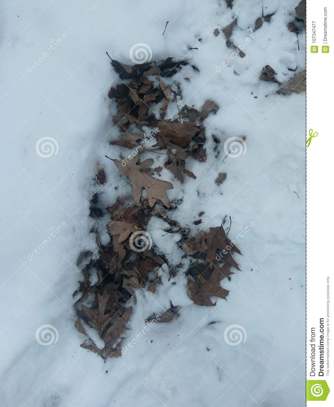 Leaves in the snow on January 7 2018 in western Indiana