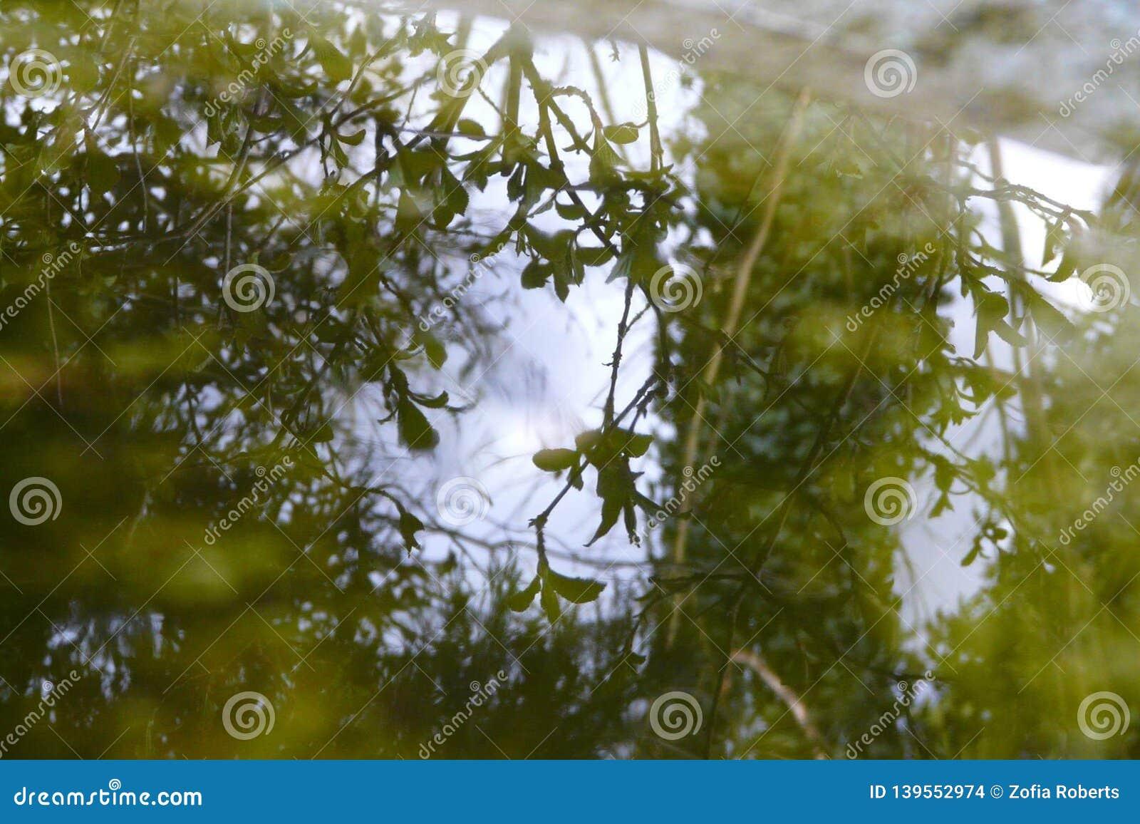 Leaves som reflekterar vatten