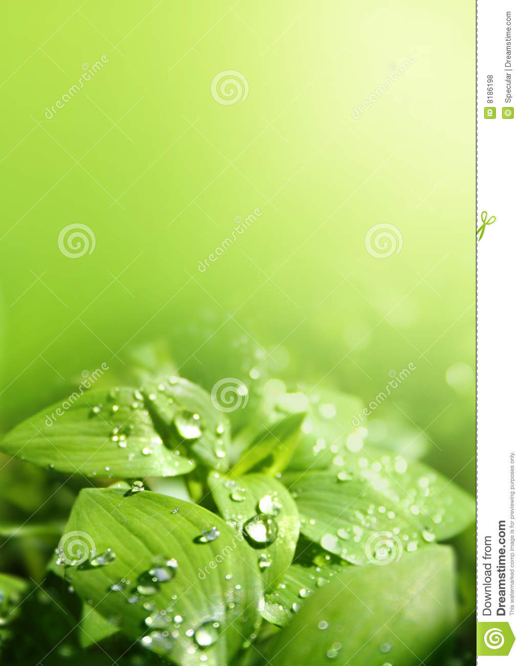 Leaves In A Sunshower Royalty Free Stock Photos  Image 8186198 # Sunshower Id_061250