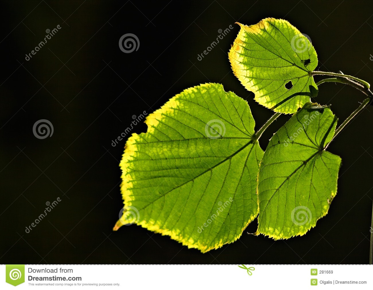 Download Leaves touched by a frost stock image. Image of foliage - 281669
