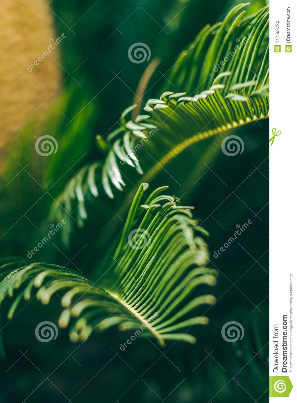 Leaves of tropical palm three. Nature macro. Vertical image.