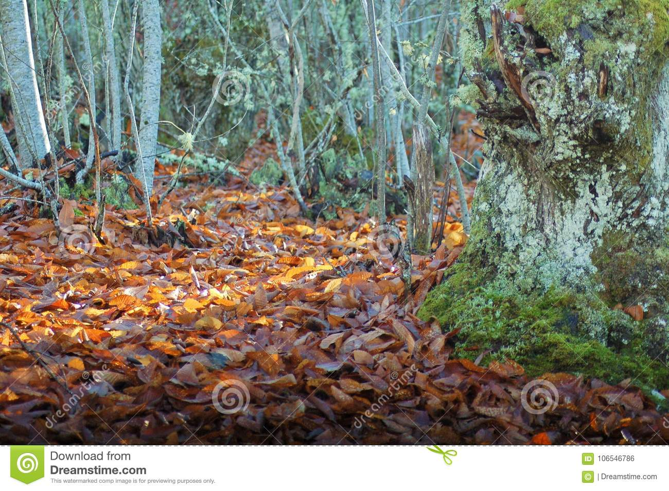 Leaves under the sunlight in the forest