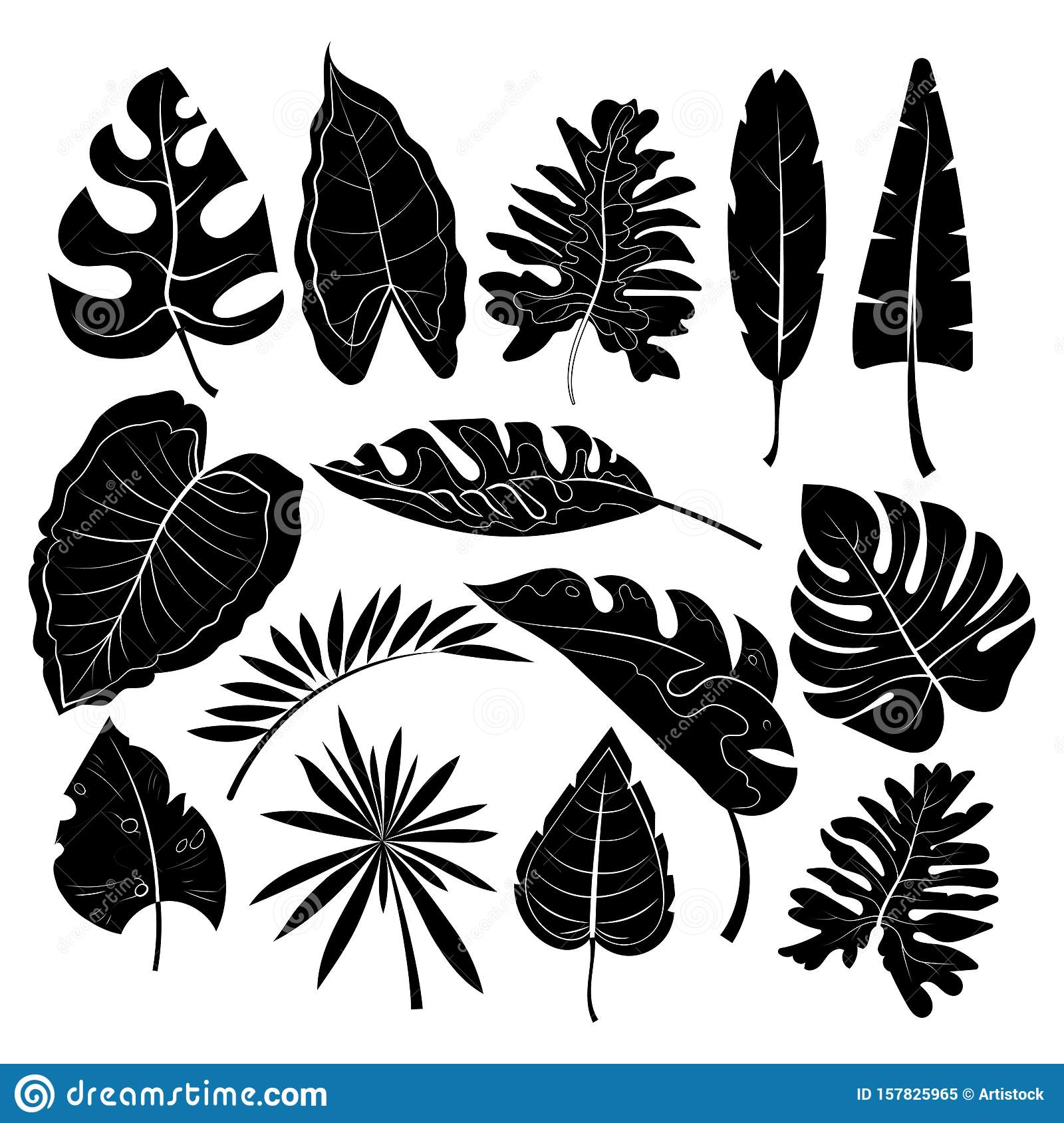 Leaves Vector Illustration Tropical Leaves Silhouettes Tropical Background Design With Exotic Palms And Plants Stock Vector Illustration Of Beach Decorative 157825965 The best selection of royalty free tropical leaves vector art, graphics and stock illustrations. https www dreamstime com leaves vector illustration tropical leaves silhouettes tropical background design exotic palms plants leaves vector image157825965