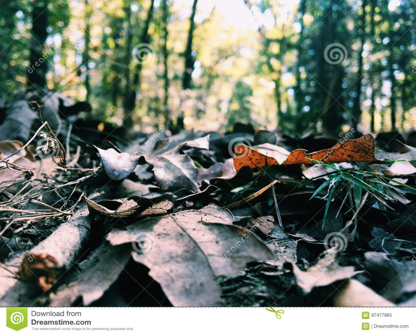 Leavess