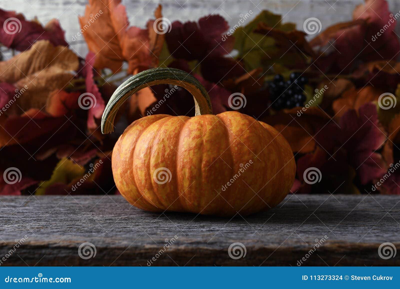Leben des Herbstkürbises noch