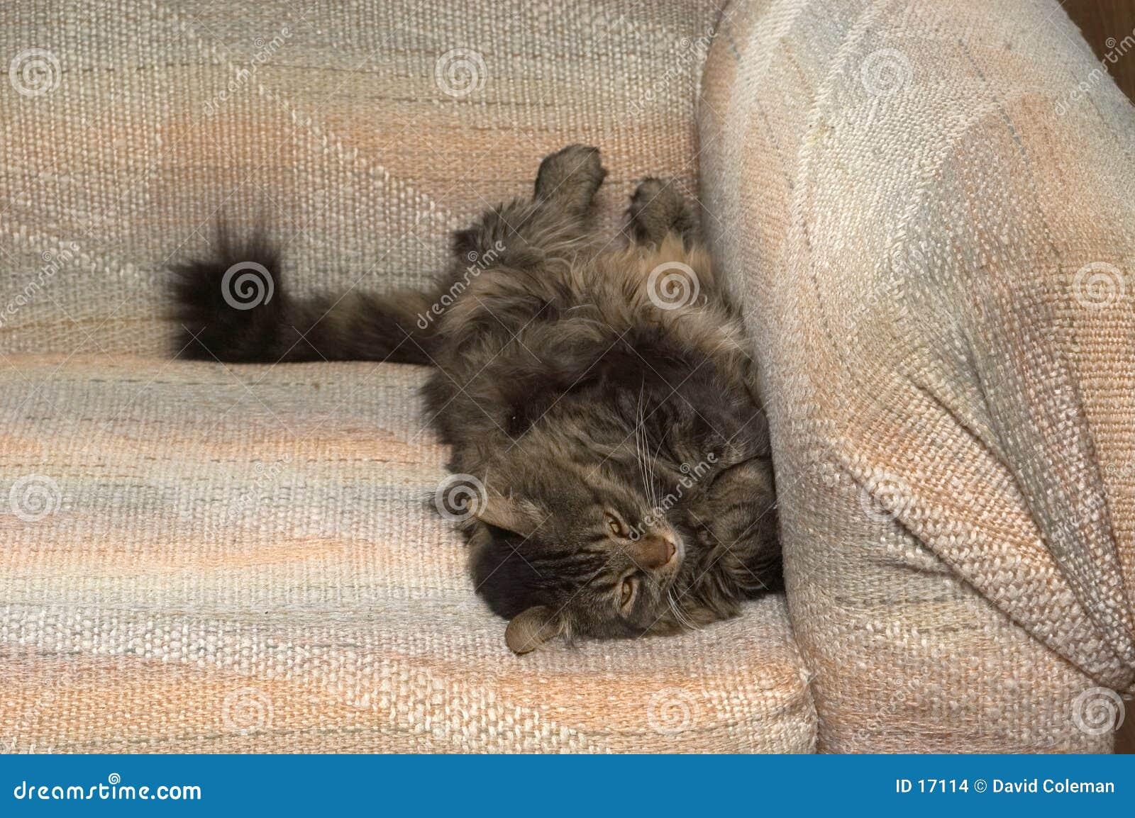 Leben einer Katze