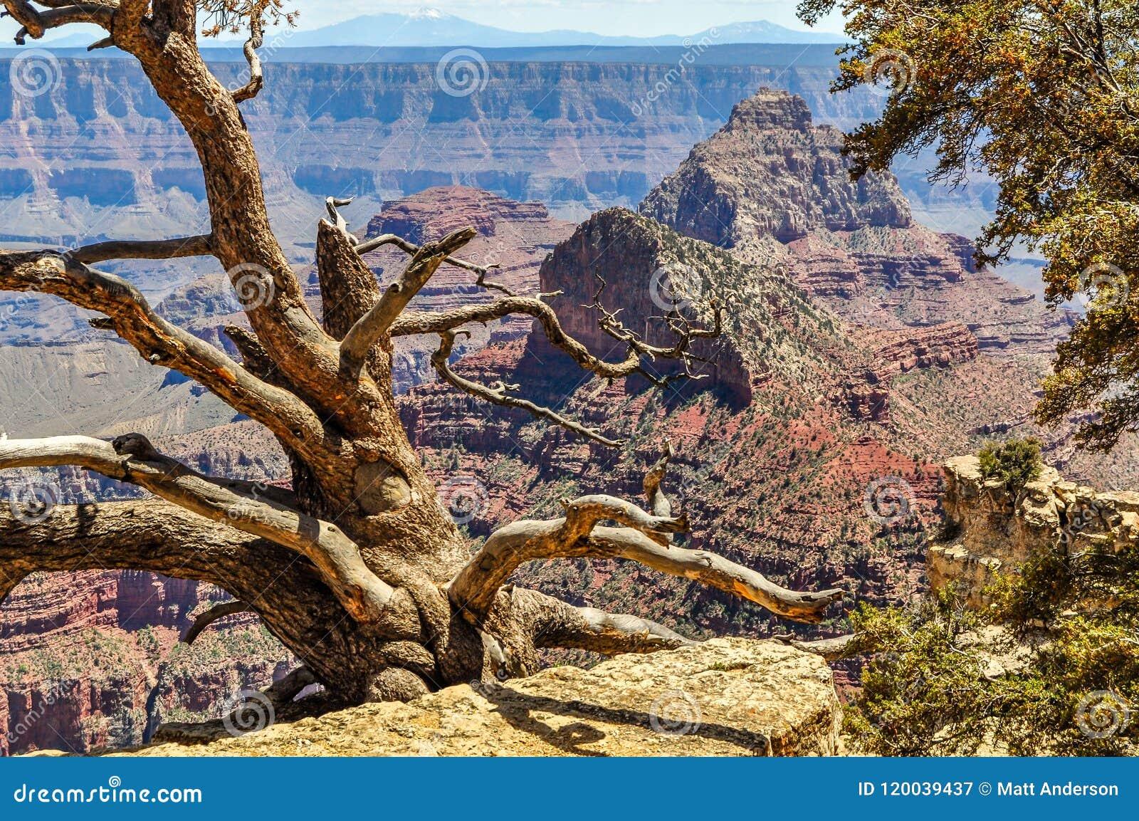 Leben oder Tod entlang der Nordkante Grand Canyon s in Arizona