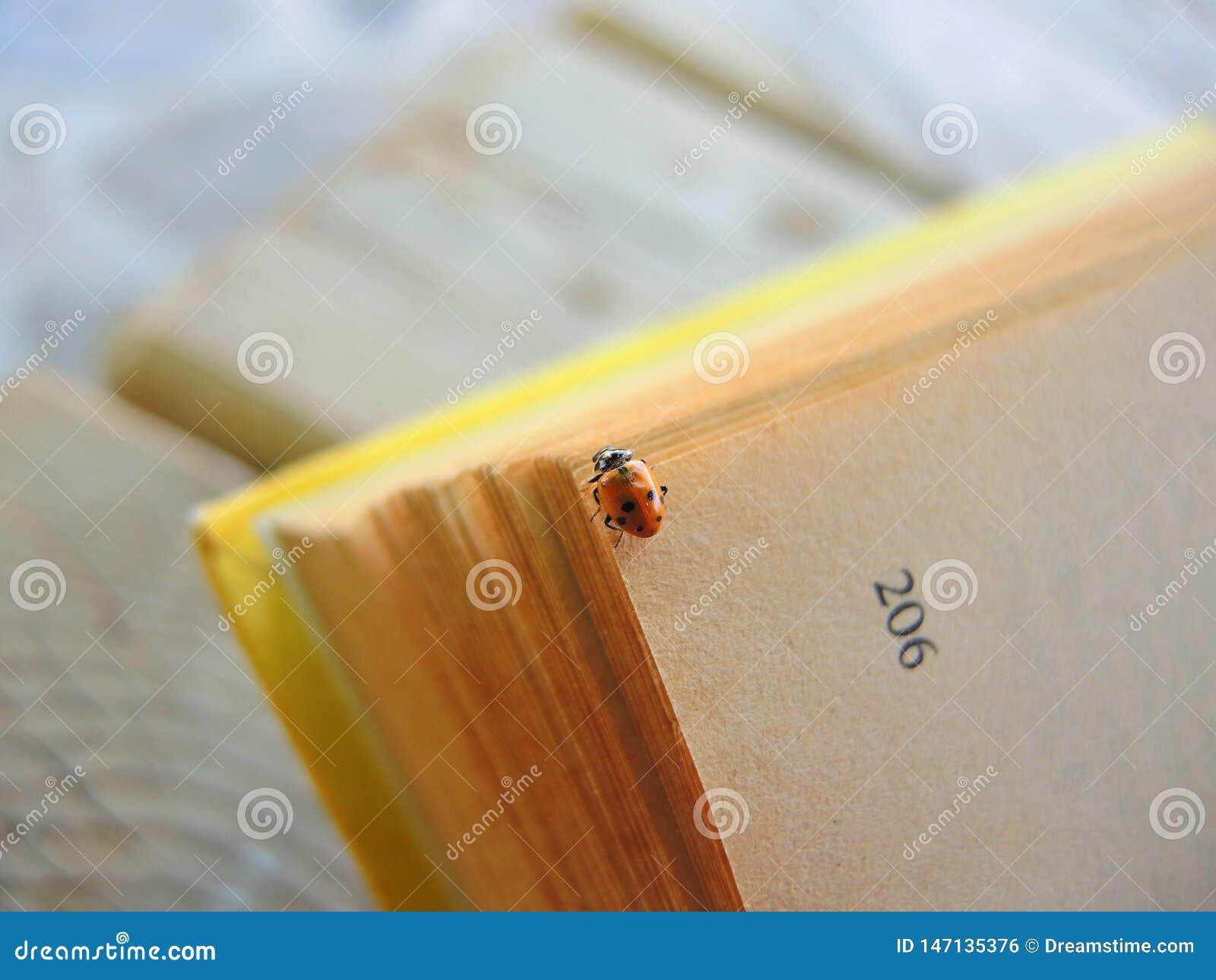 Lectura de la mariquita en un libro