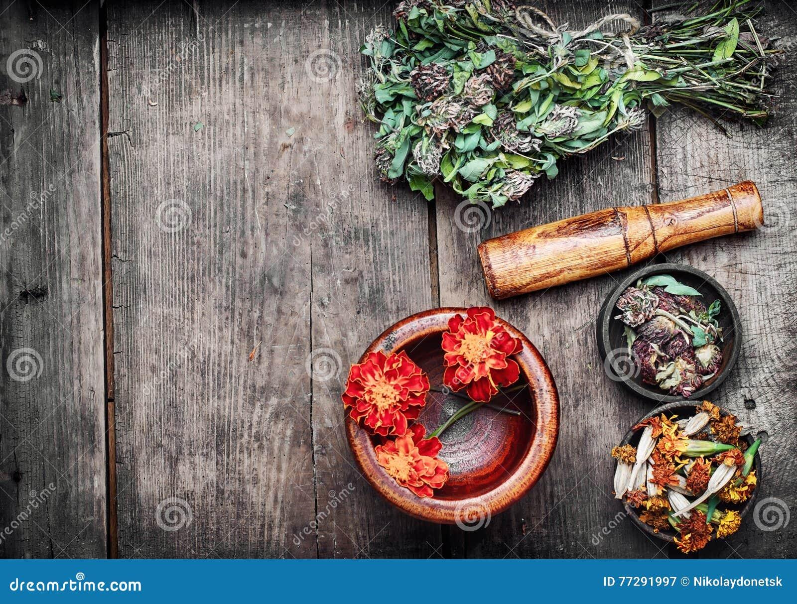 Leczniczy ziele i rośliny