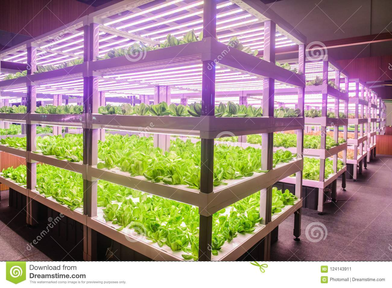 Led plant growth lamp used in Vertical agriculture