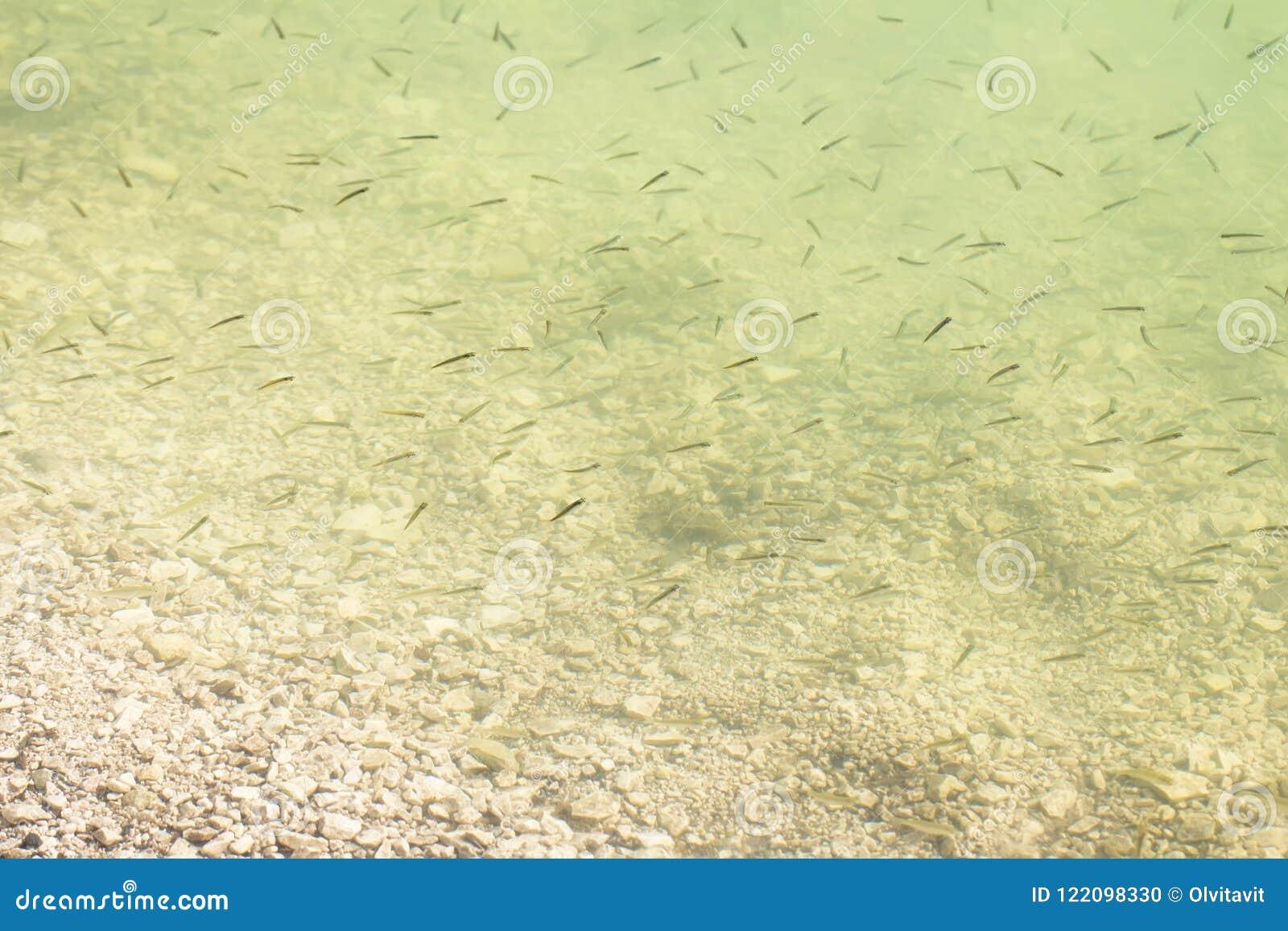 Leef gebraden gerecht in het meer in ondiep water op een de zomerdag