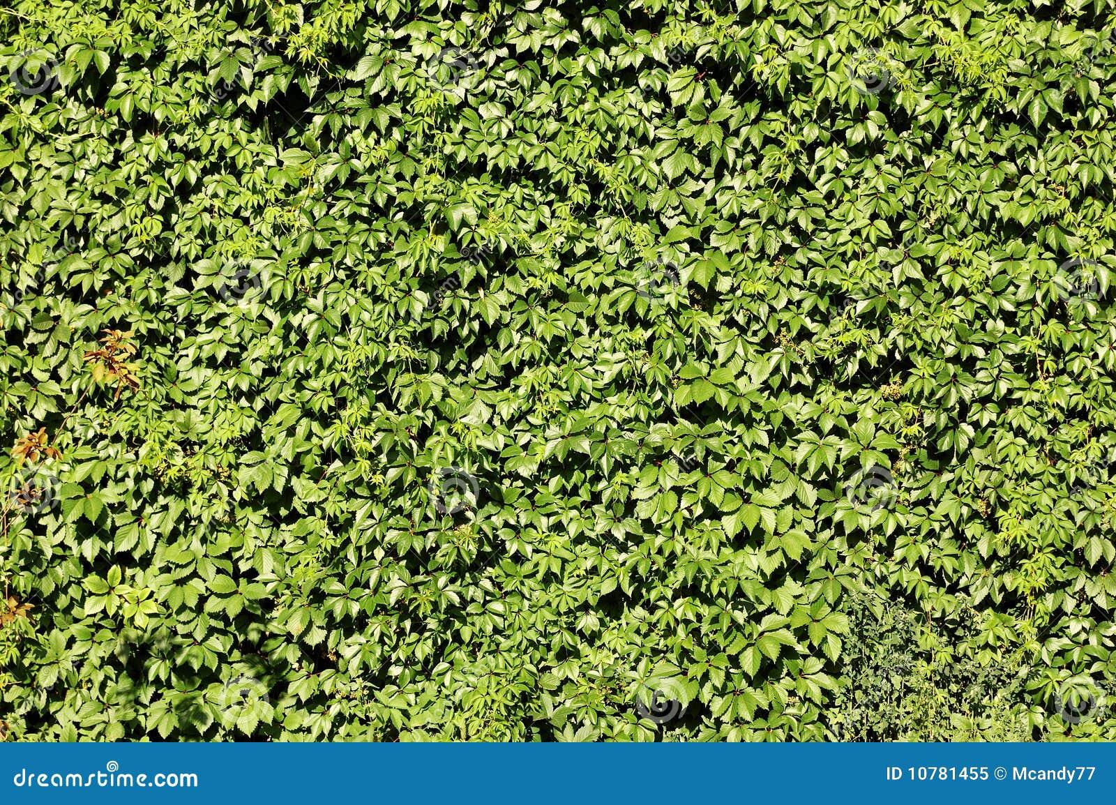 Leef omheining van groen gebladerte