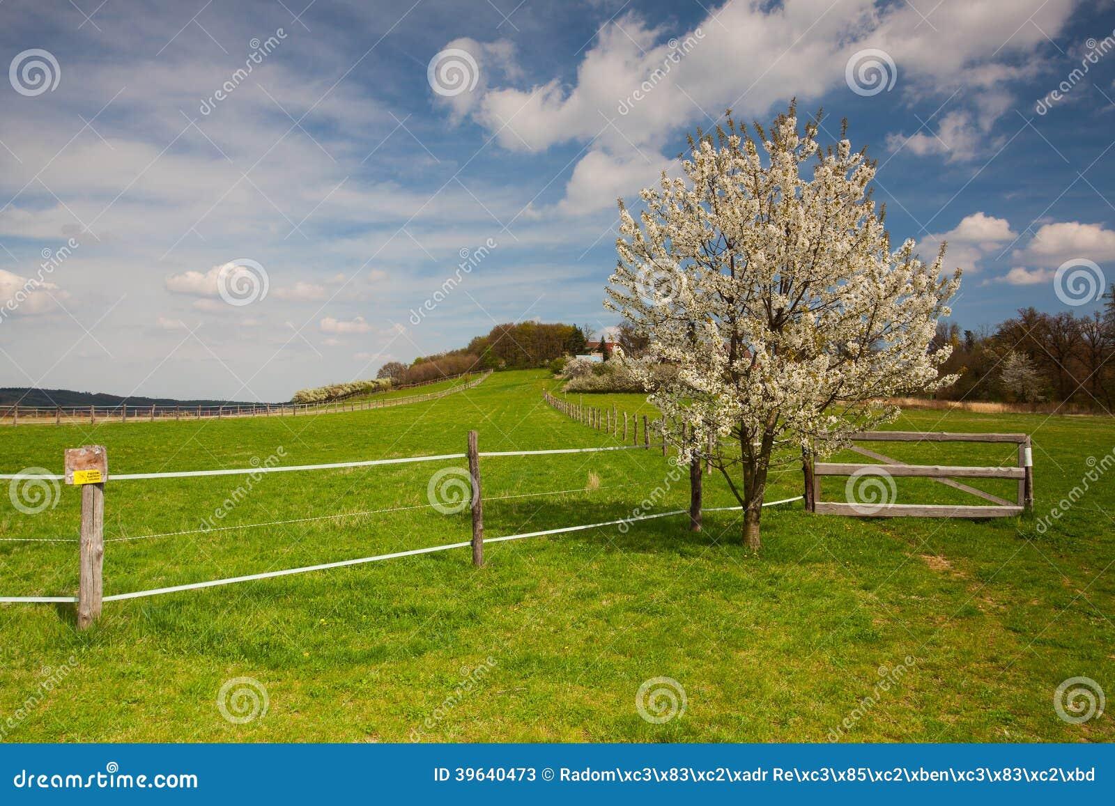 Leeg weiland voor vee in de lente