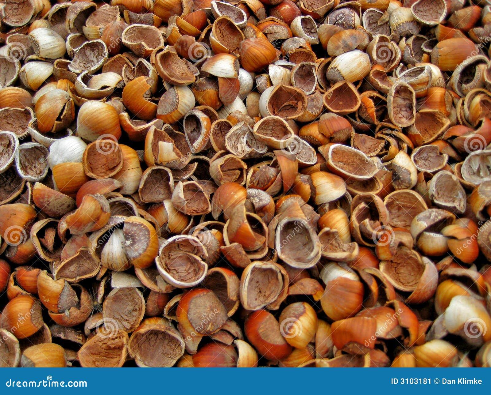 Leere Haselnuss-Shells
