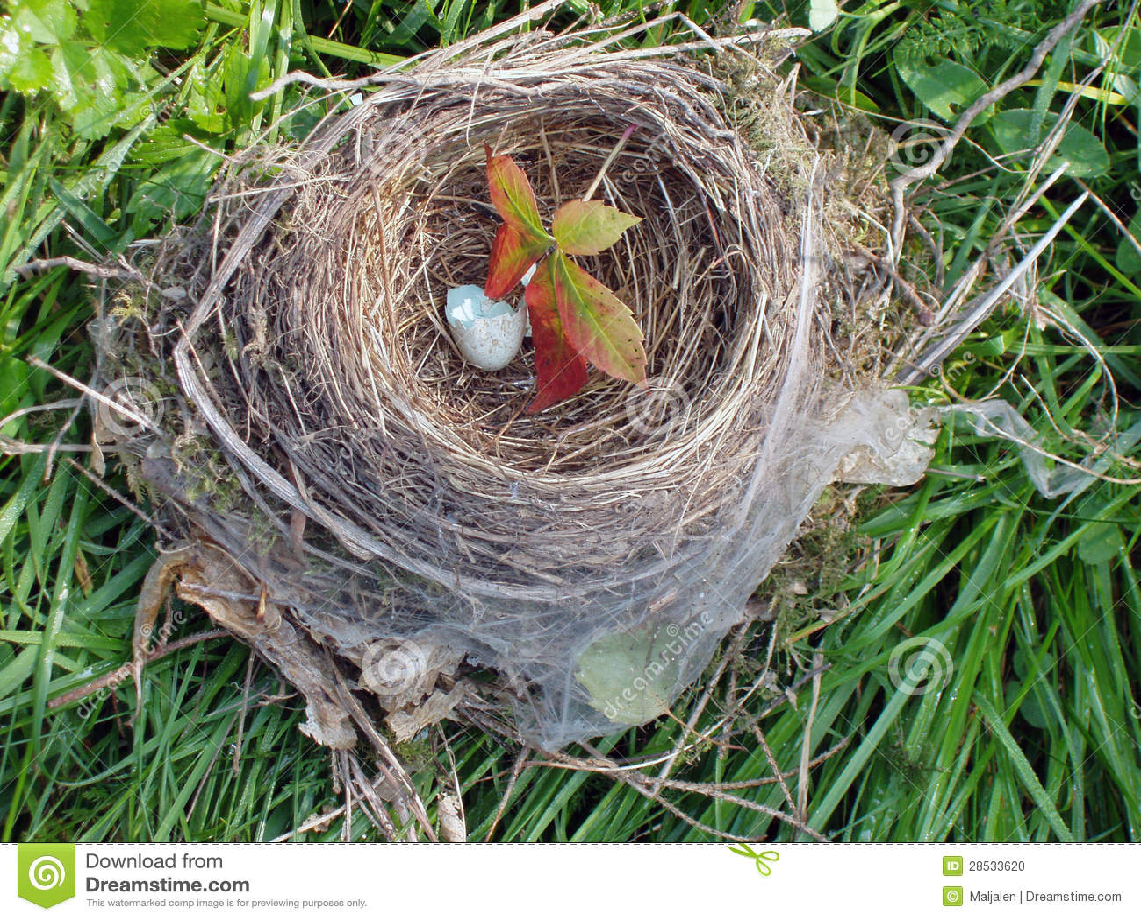 leeres nest stockfoto bild von verlassen ge ffnet brach 28533620. Black Bedroom Furniture Sets. Home Design Ideas