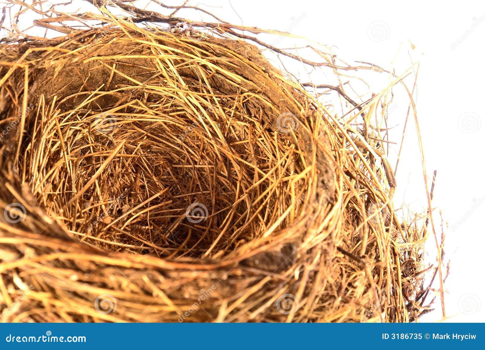 leeres vogel nest stockbild bild von robin haupt eier 3186735. Black Bedroom Furniture Sets. Home Design Ideas