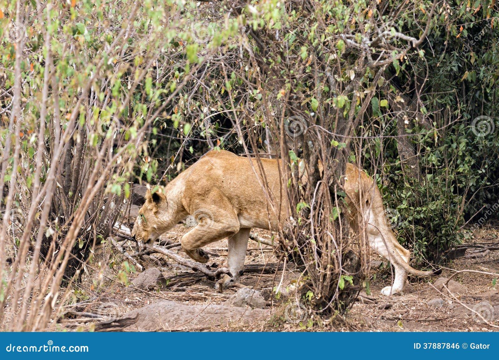 Leeuwin de jacht