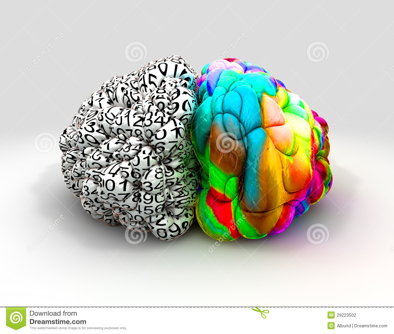 Left And Right Brain Concept Front Stock Photography - Image: 29223502