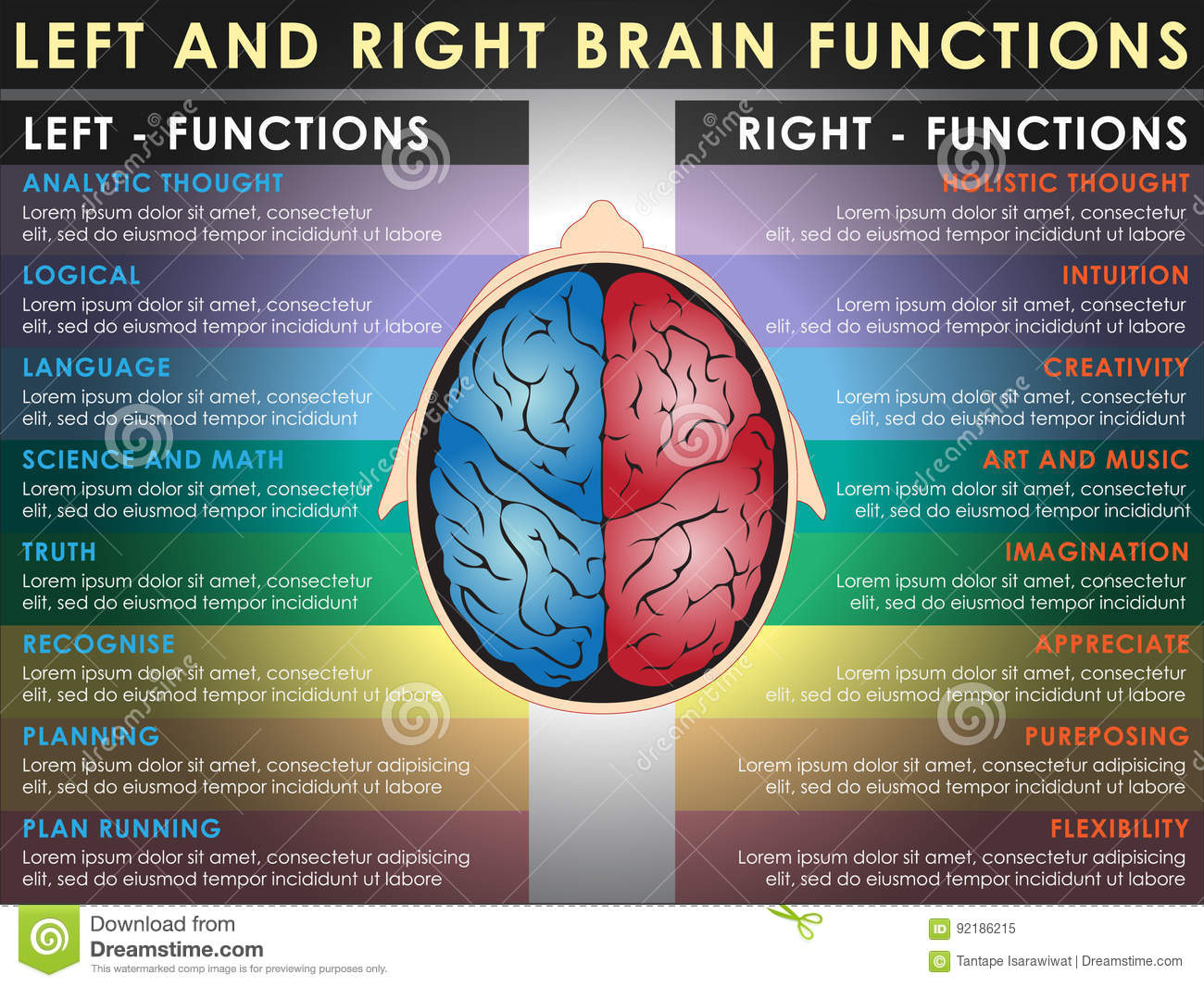Left And Right Brain Functions Stock Vector