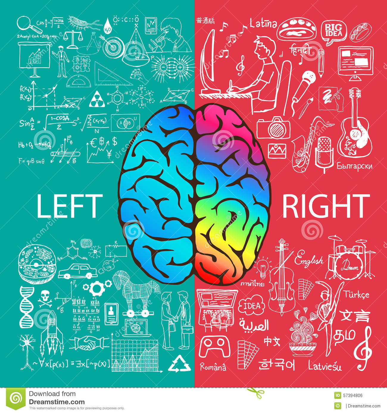 Left And Right Brain Functions With Doodles Stock Vector ...