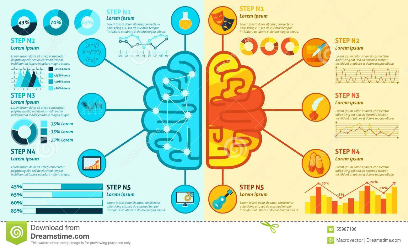 Left And Right Brain Infographics Stock Vector - Image: 55987186