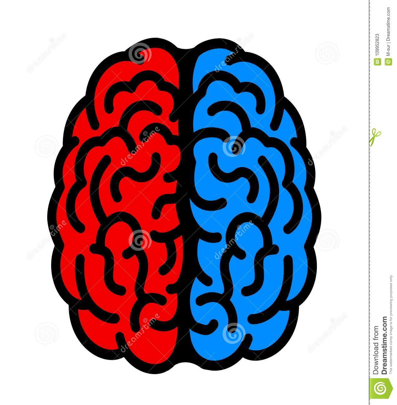 Left And Right Hemisphere Of Brain Stock Vector Illustration Of