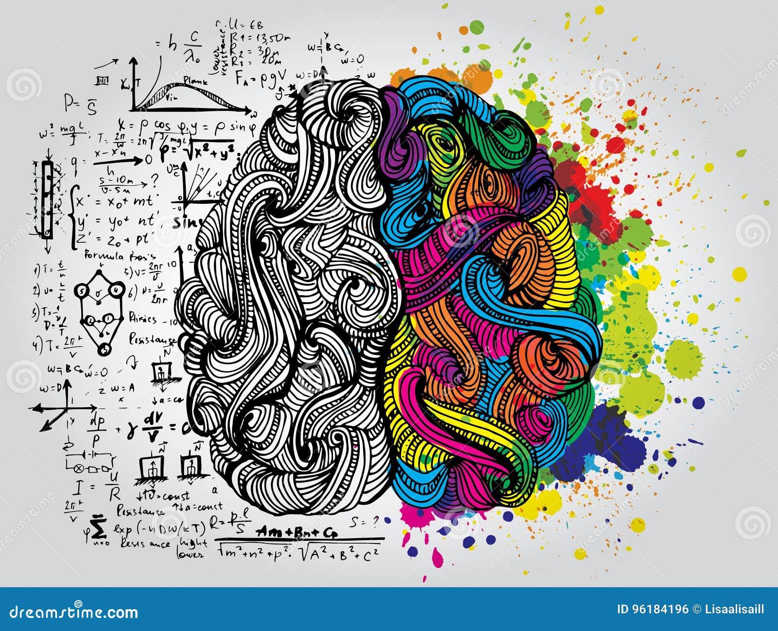 Left and right human brain. Creative half and logic half of human mind. Vector illustration.