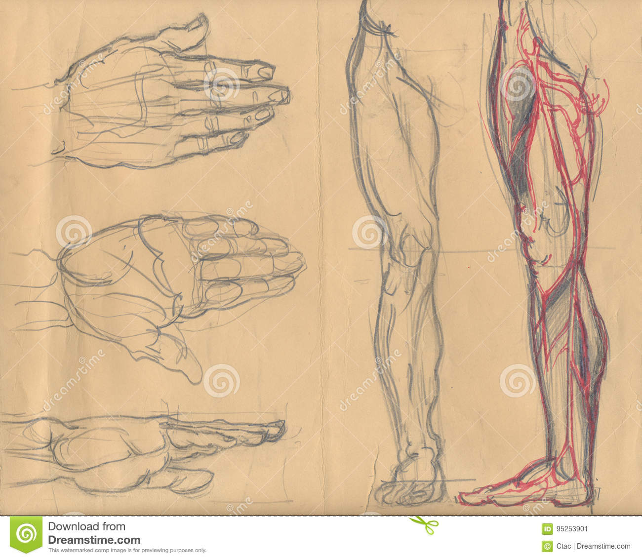 Leg and palm sketches stock illustration. Illustration of brown ...