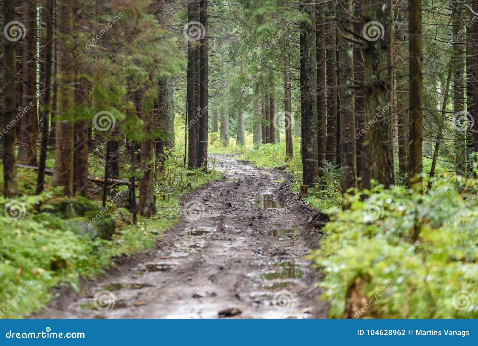 Download Lege Grintweg In Het Platteland In De Zomer Stock Foto - Afbeelding bestaande uit boomstammen, sporen: 104628962