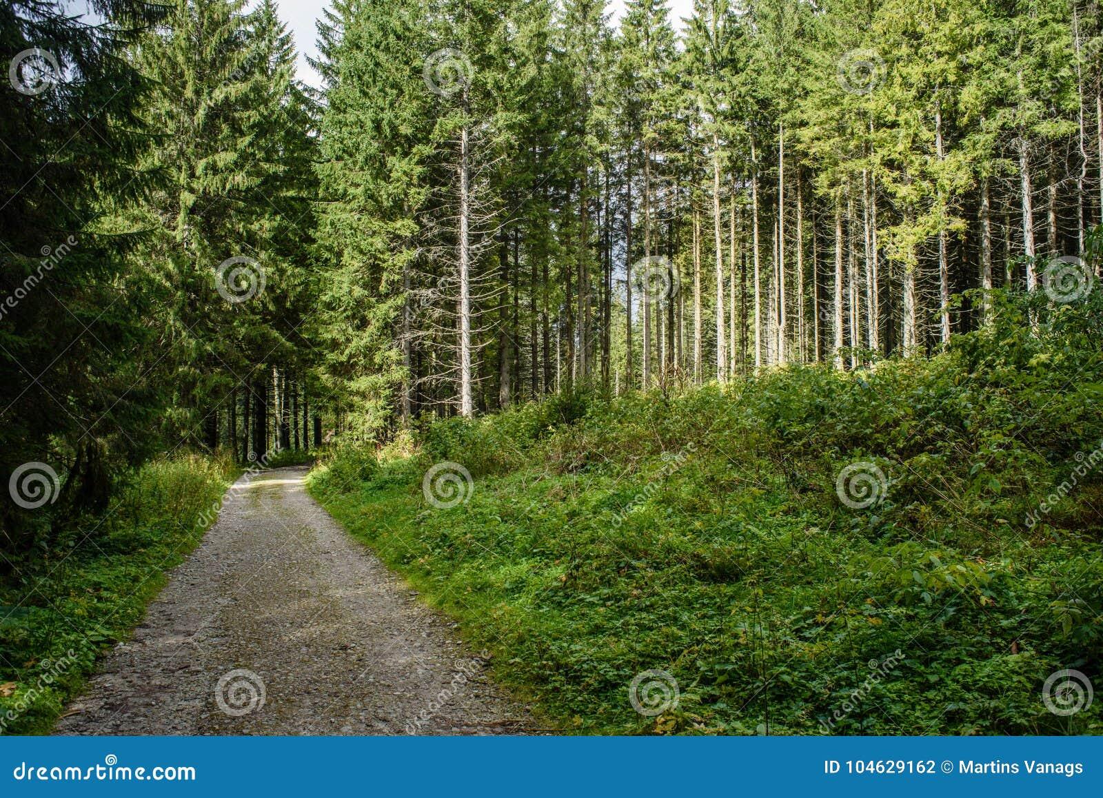 Download Lege Grintweg In Het Platteland In De Zomer Stock Foto - Afbeelding bestaande uit wandeling, vakantie: 104629162