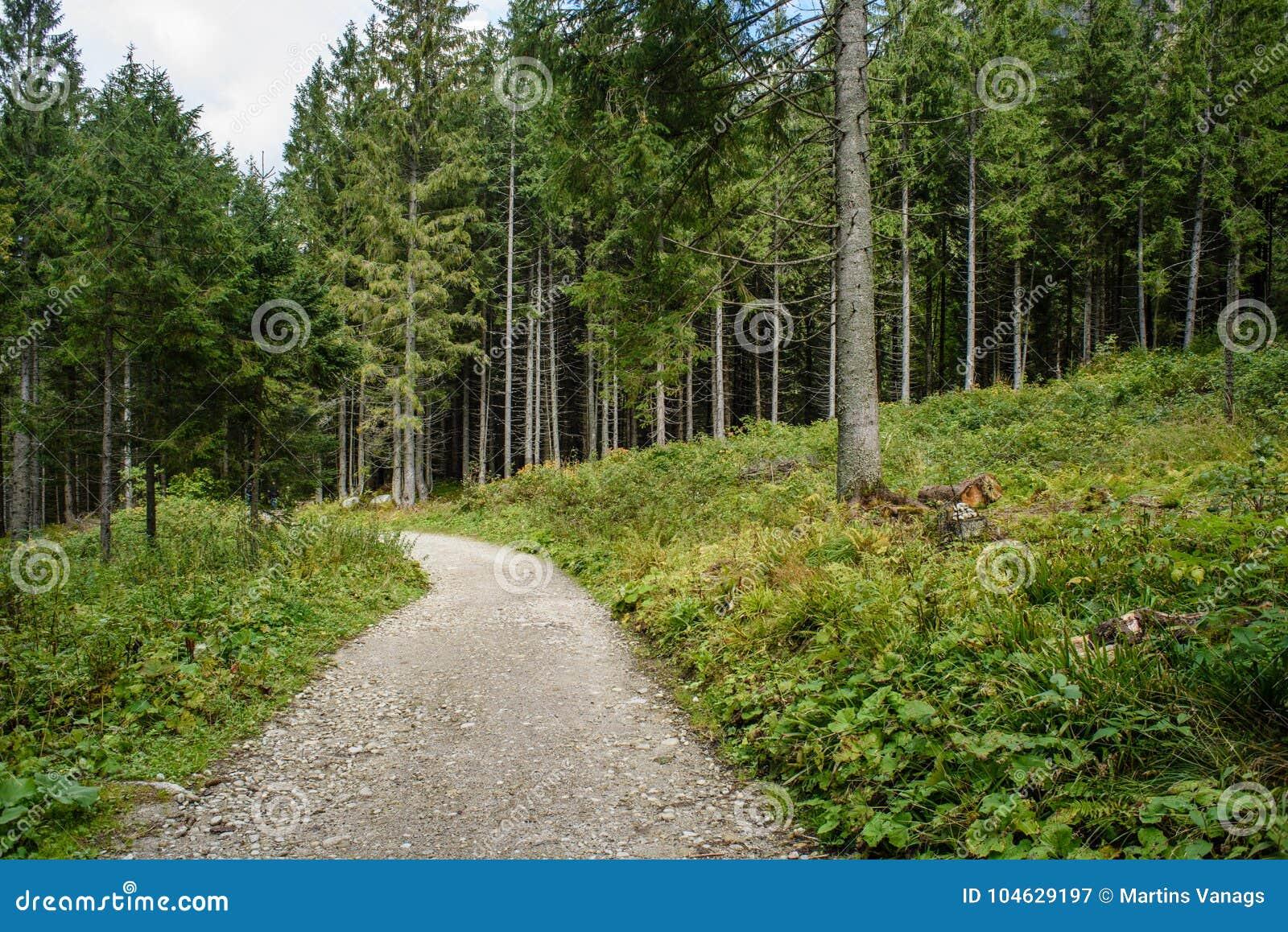 Download Lege Grintweg In Het Platteland In De Zomer Stock Afbeelding - Afbeelding bestaande uit boomstammen, bomen: 104629197