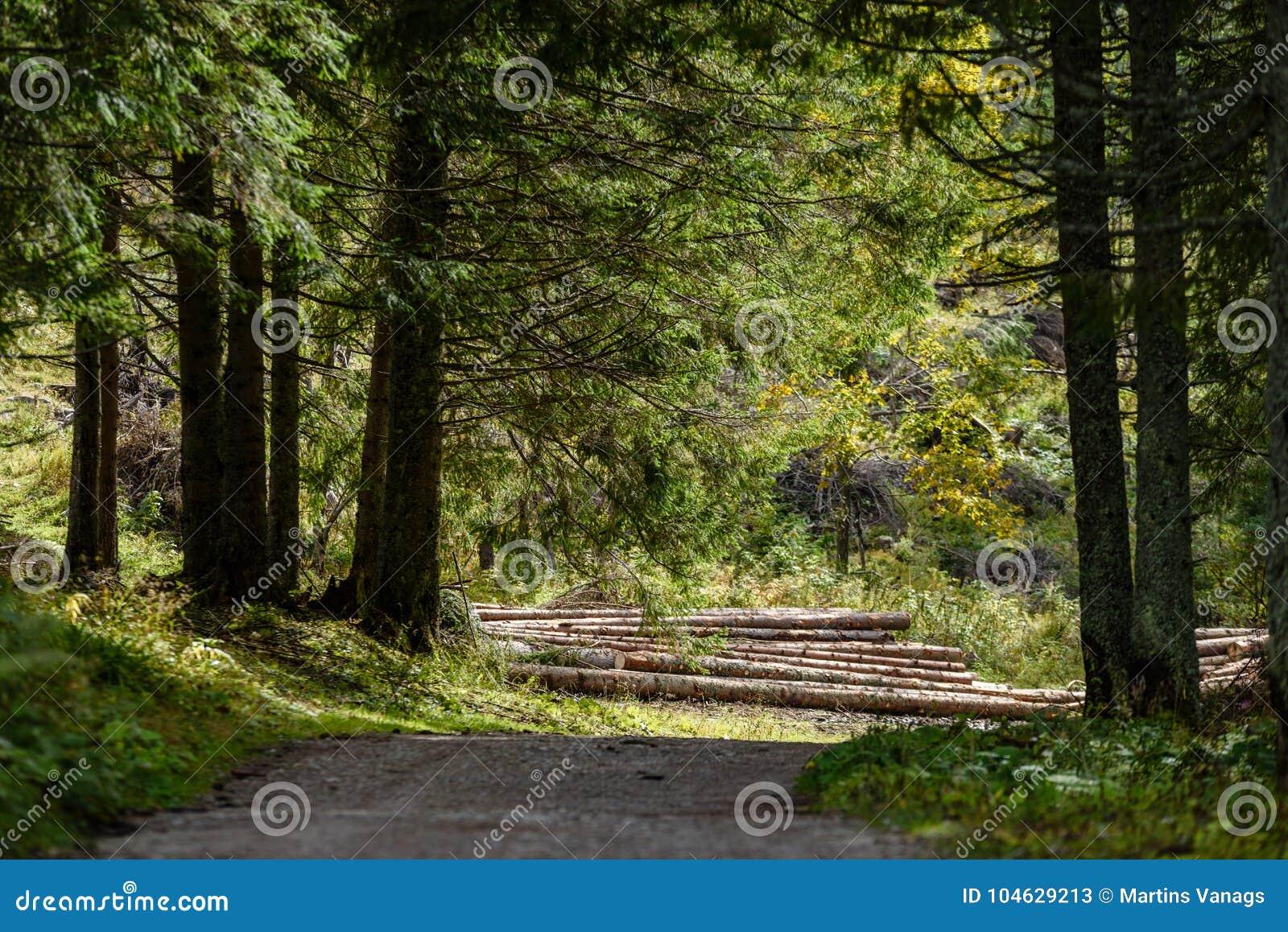 Download Lege Grintweg In Het Platteland In De Zomer Stock Afbeelding - Afbeelding bestaande uit installaties, perspectief: 104629213
