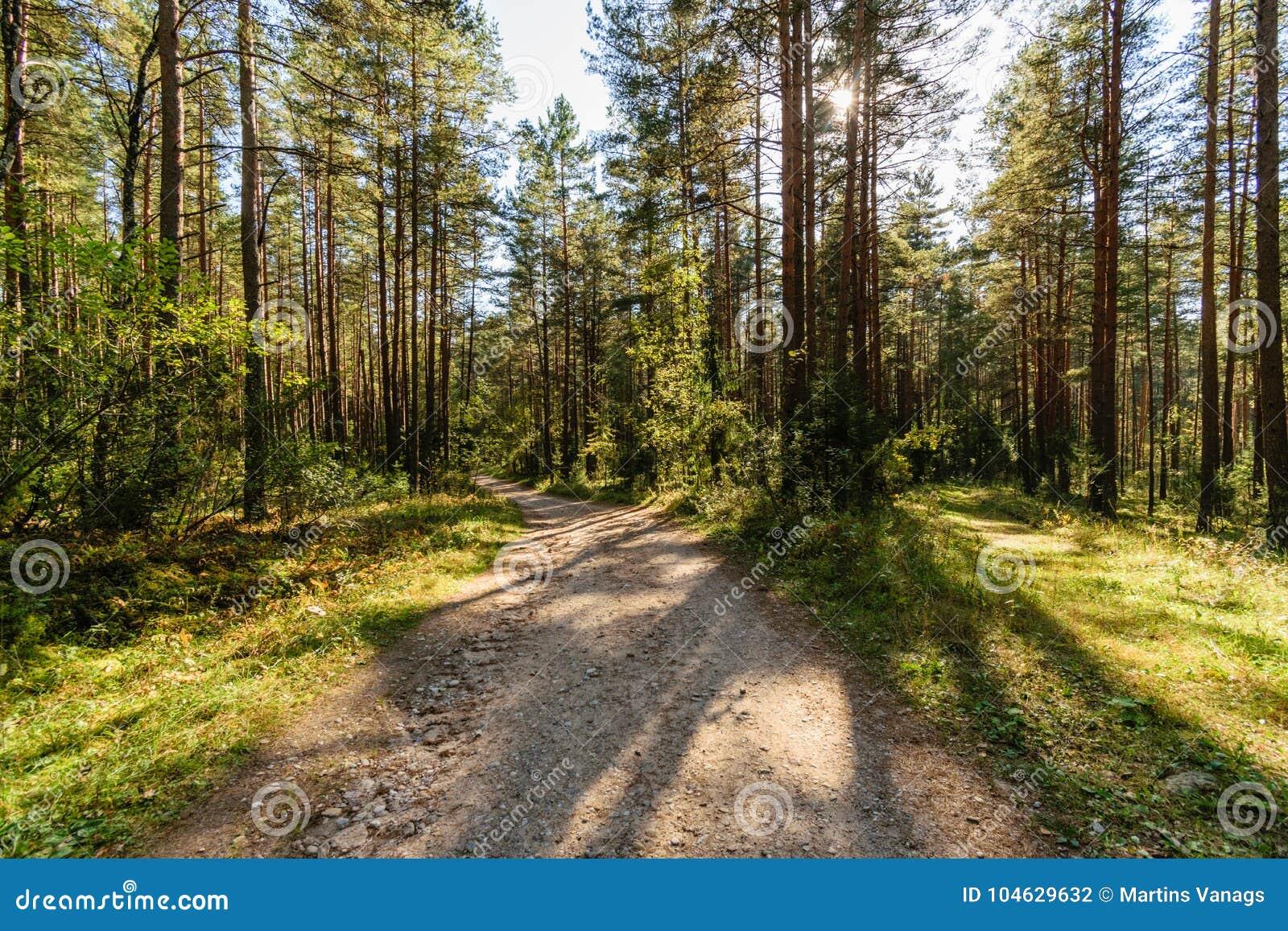 Download Lege Grintweg In Het Platteland In De Zomer Stock Foto - Afbeelding bestaande uit seizoen, installaties: 104629632