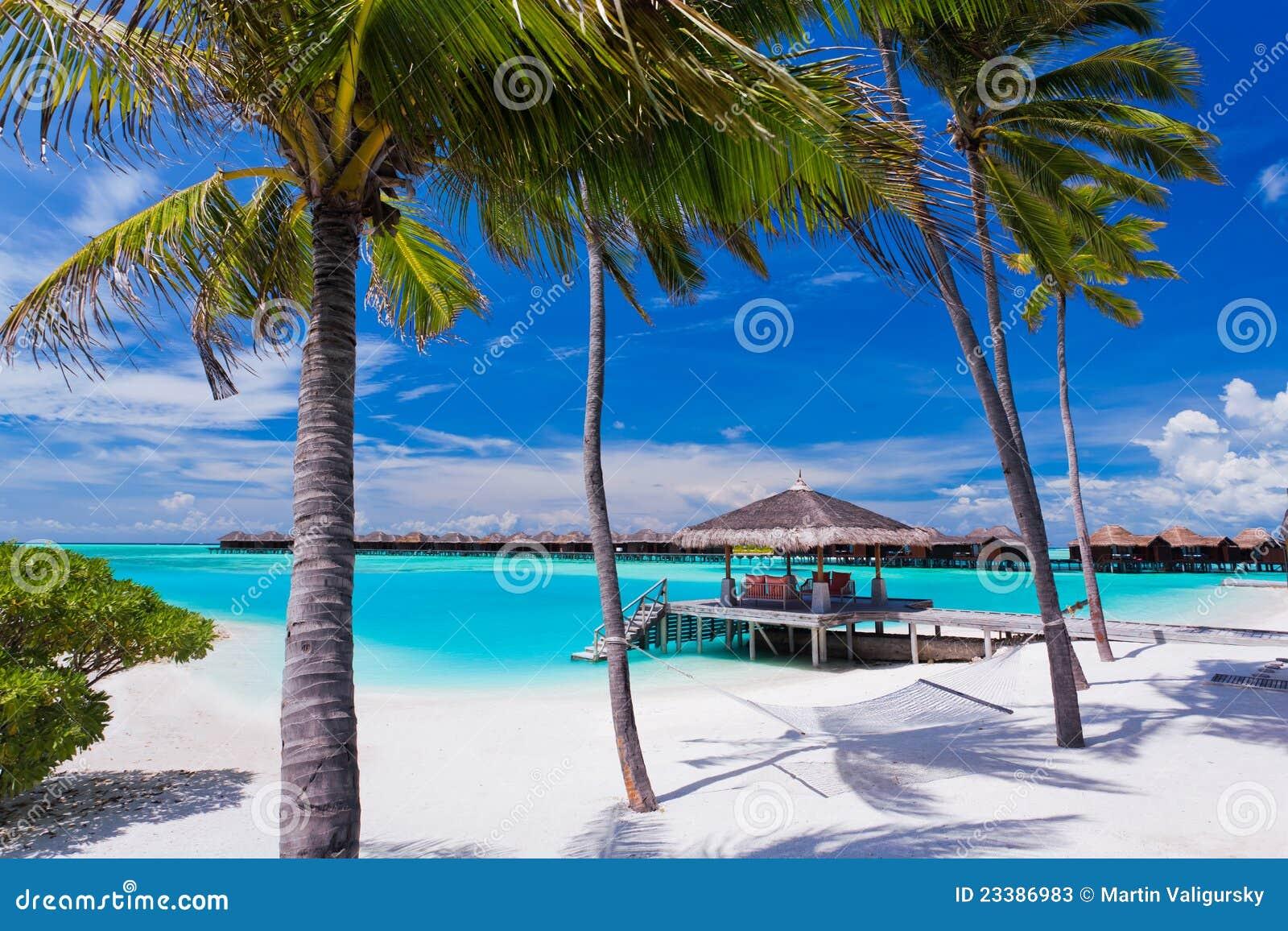lege hangmat tussen palmen op het strand stock afbeelding afbeelding bestaande uit lagune. Black Bedroom Furniture Sets. Home Design Ideas