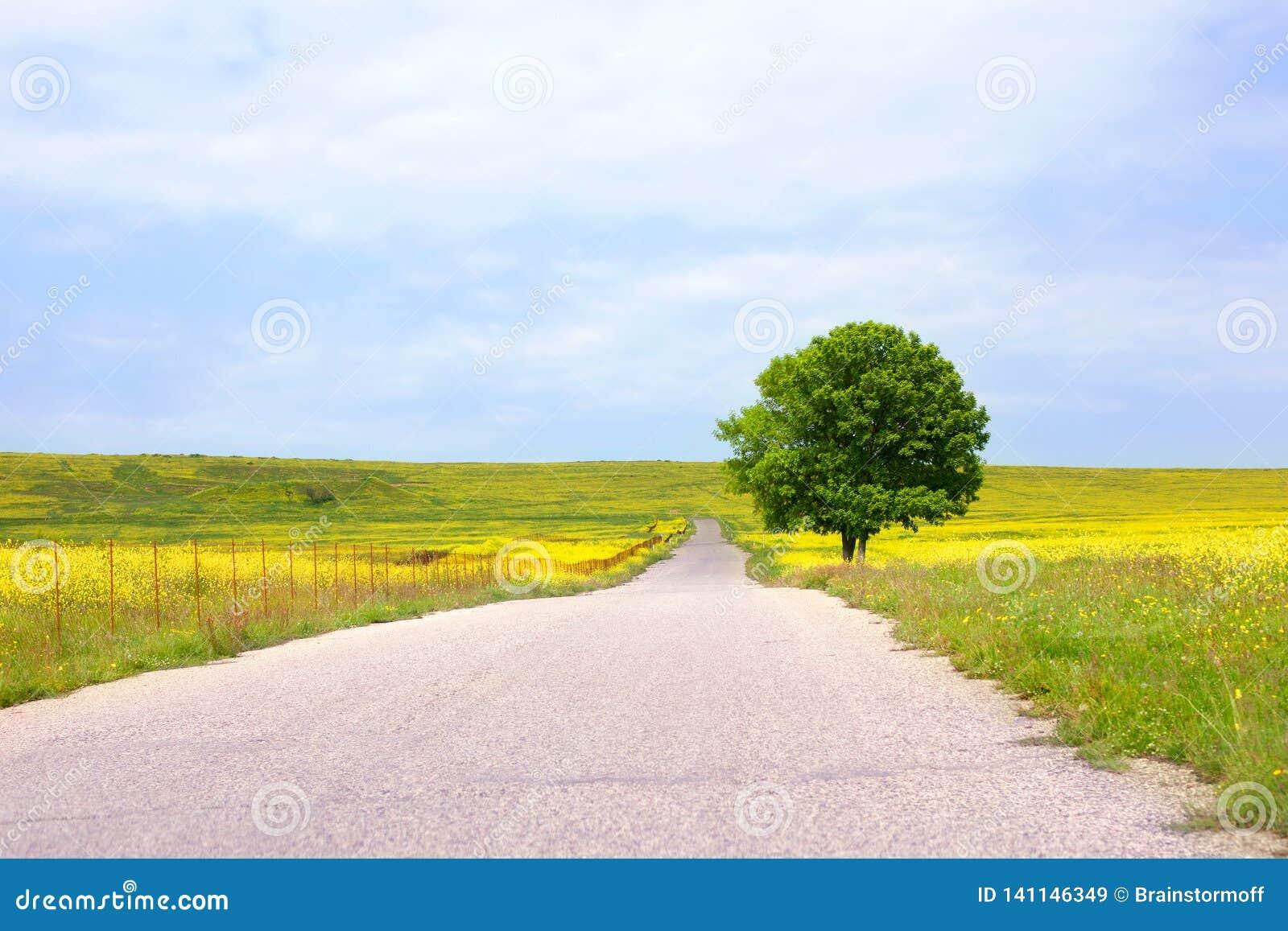 Lege landelijke weg onder groene gebieden met gele bloemen en een eenzame grote groene boom met een mooie ronde kroon