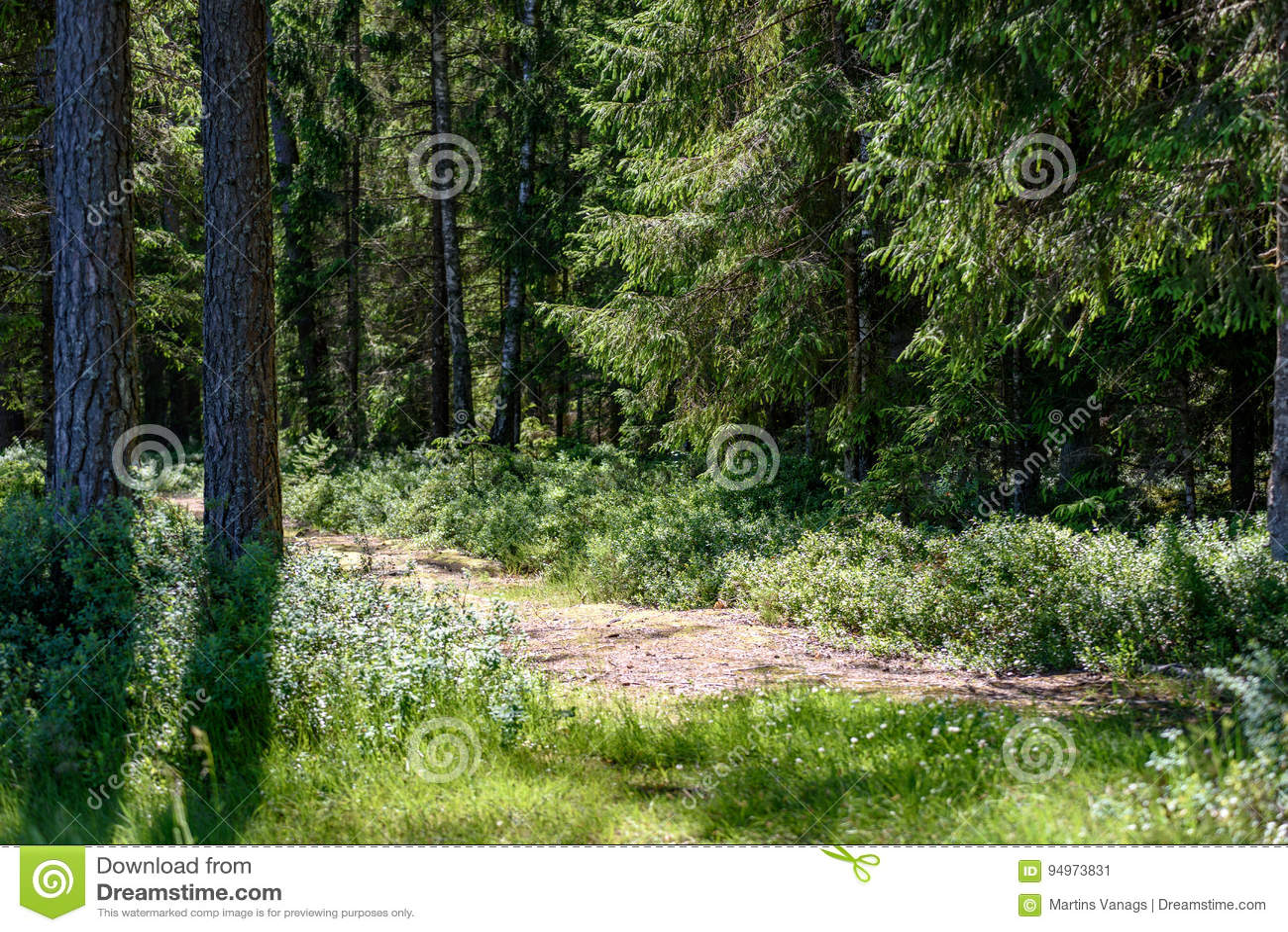 Lege weg in het platteland in de zomer