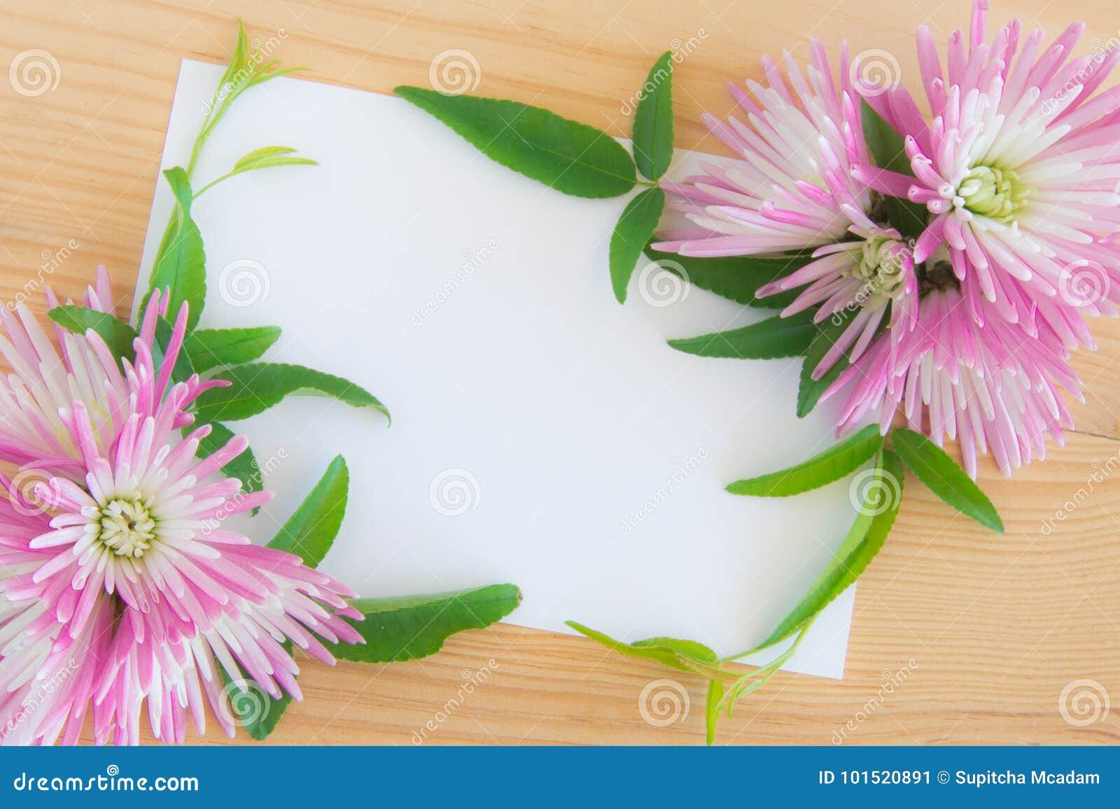 Lege witte groetkaart met roze cherysanthemum