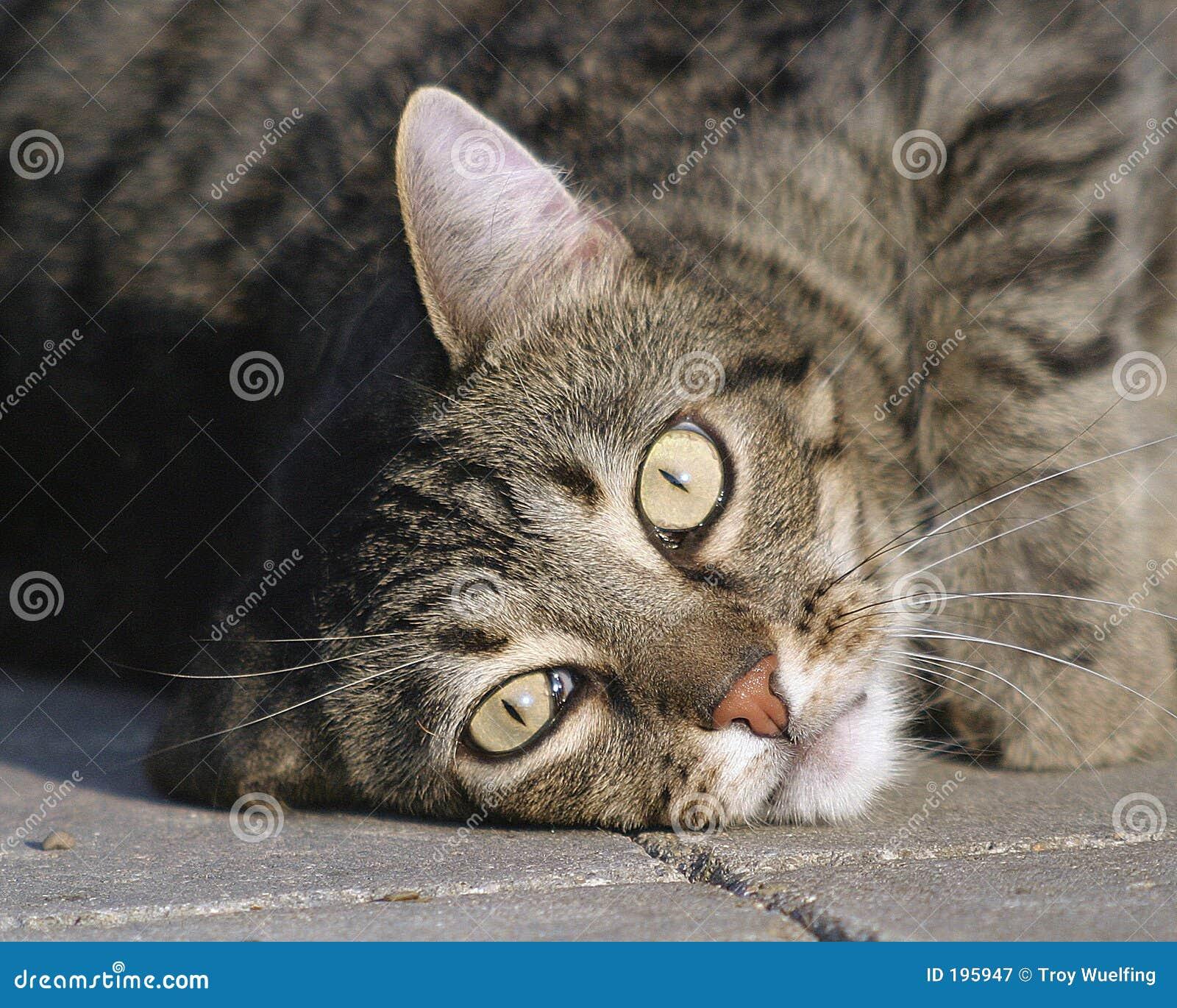 Legen der Katze