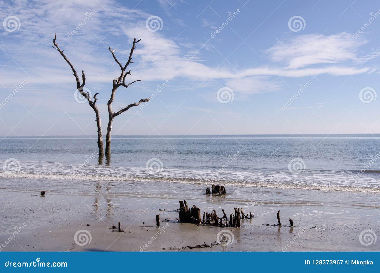 Legname galleggiante ed alberi morti sulla spiaggia al parco di stato dell isola di caccia