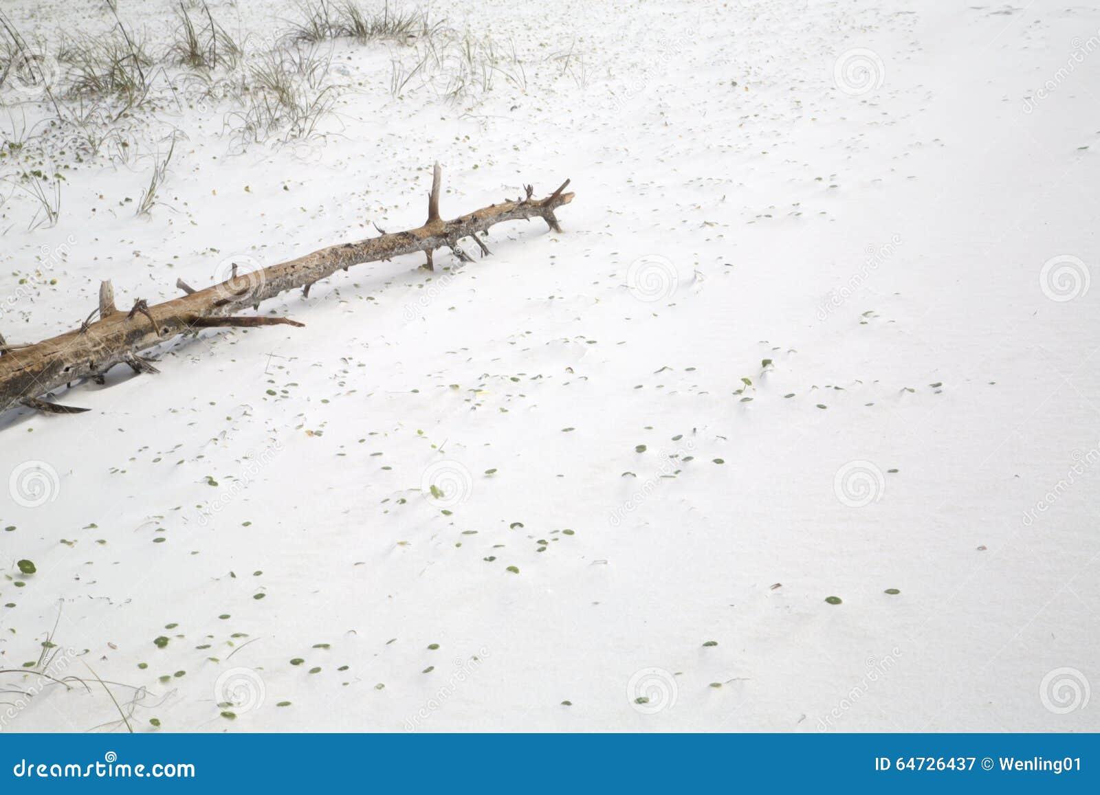 Legno appassito sulla spiaggia sabbiosa
