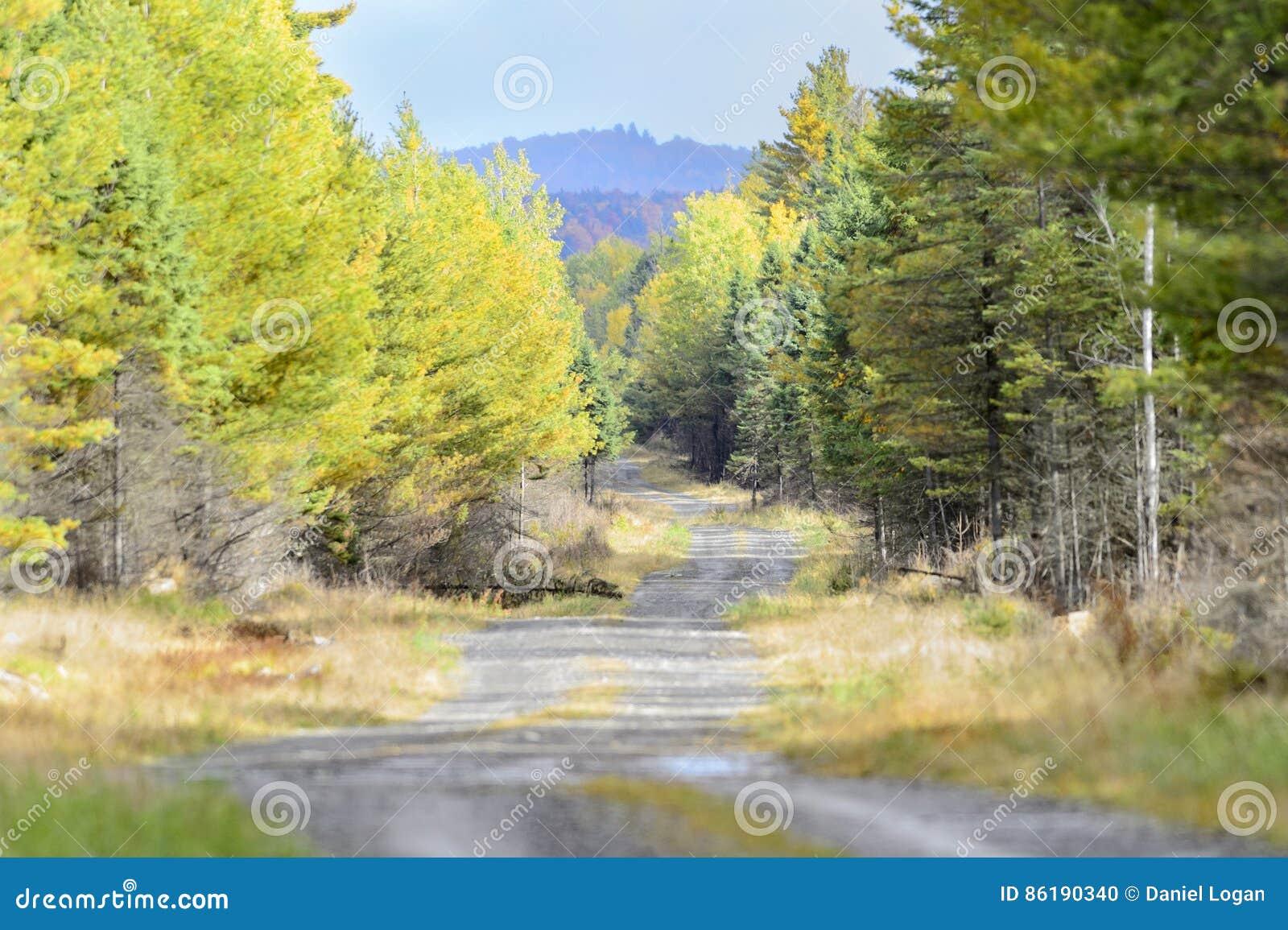 Legno di Maine della strada non asfaltata