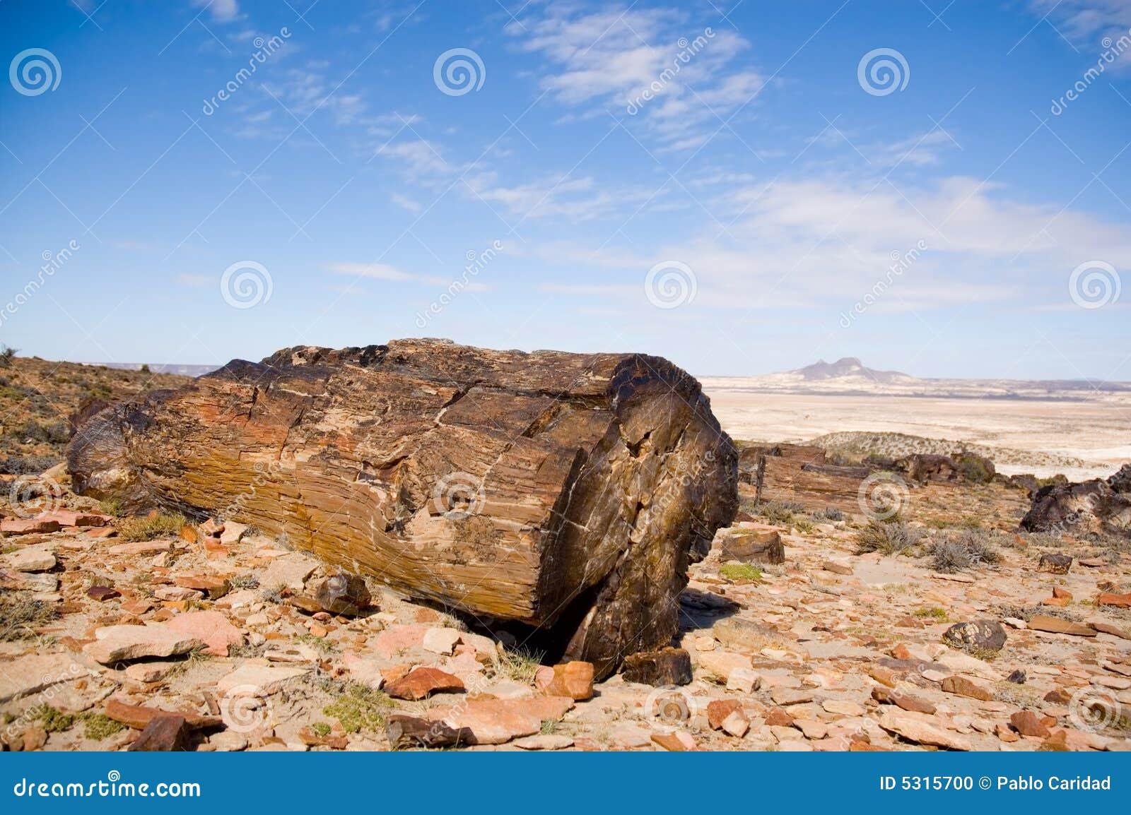 Download Legno Petrified Nel Patagonia. Fotografia Stock - Immagine di arido, paleontologia: 5315700