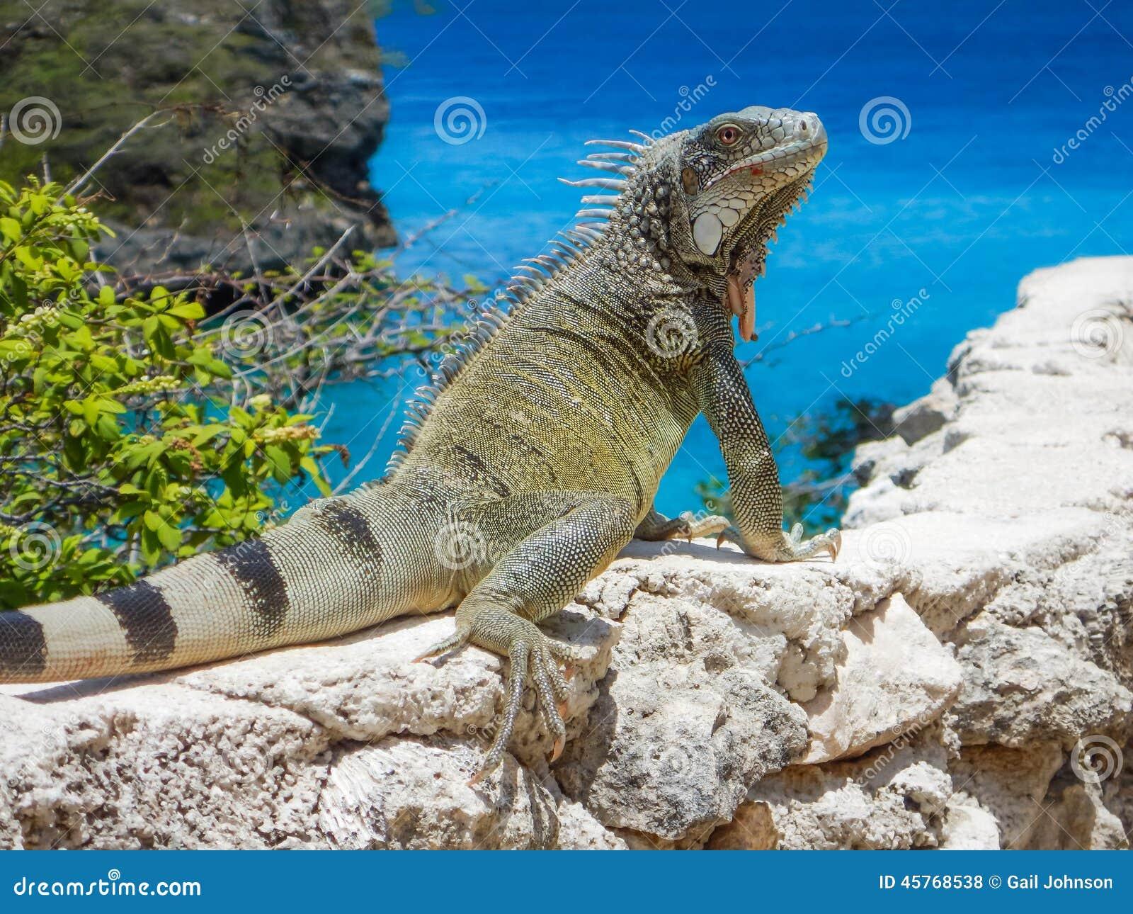 Leguan und das Meer